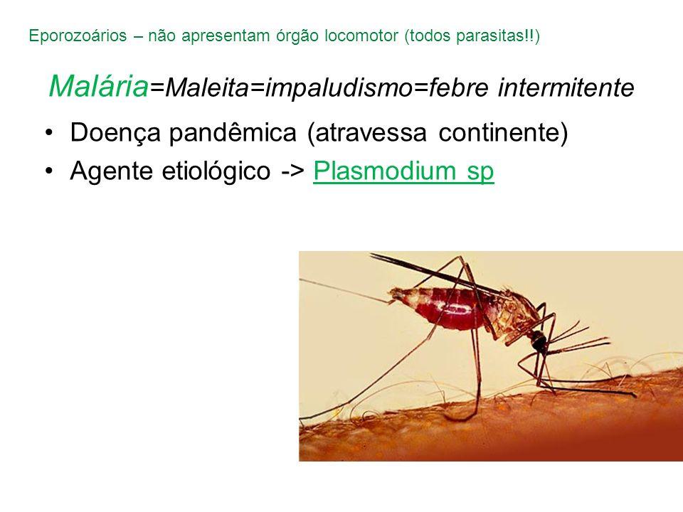 Malária=Maleita=impaludismo=febre intermitente