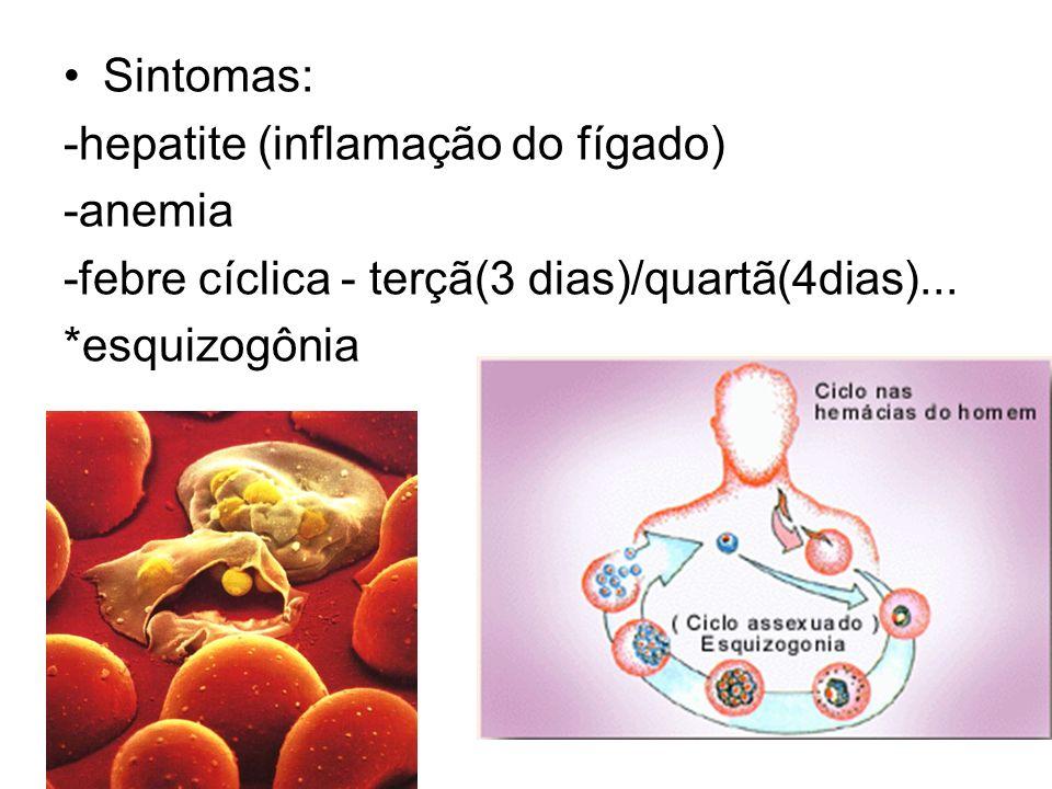 Sintomas: -hepatite (inflamação do fígado) -anemia. -febre cíclica - terçã(3 dias)/quartã(4dias)...