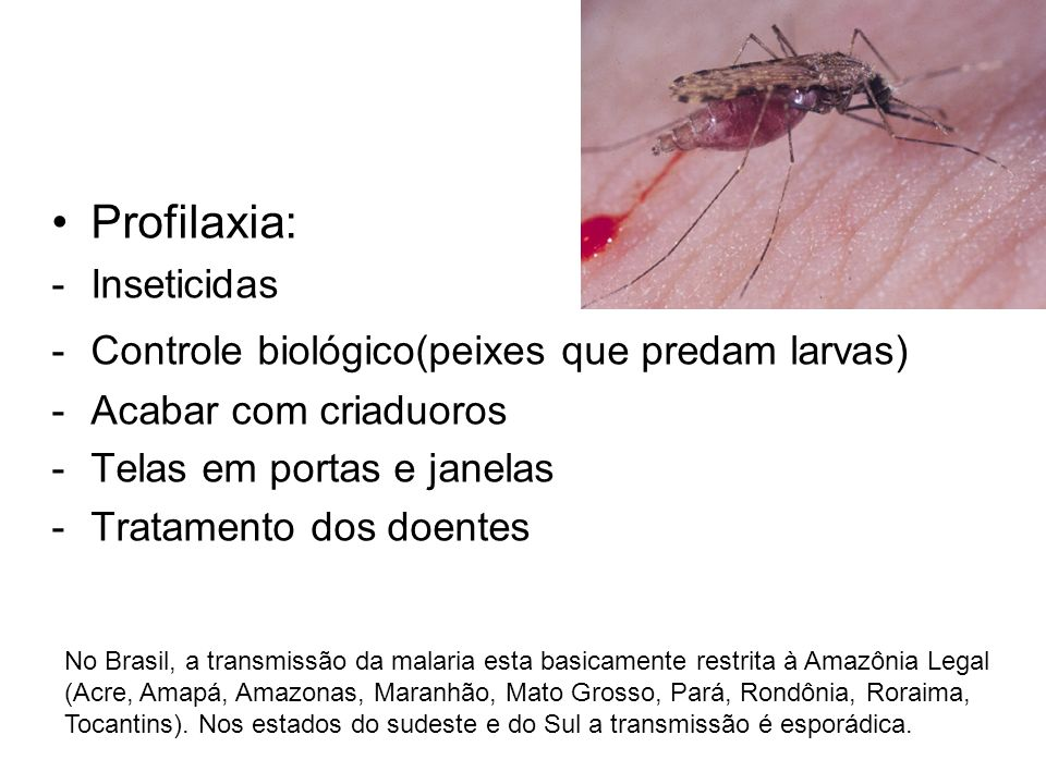Profilaxia: Inseticidas Controle biológico(peixes que predam larvas)