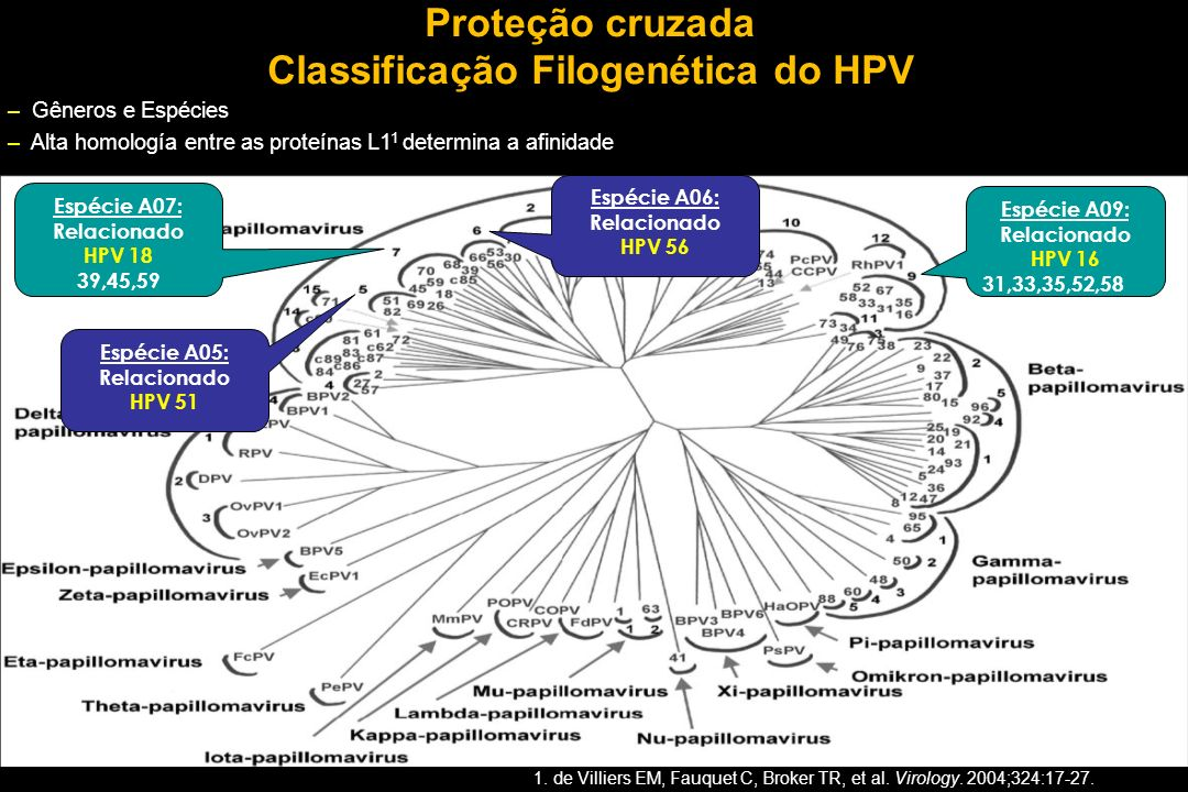 Classificação Filogenética do HPV