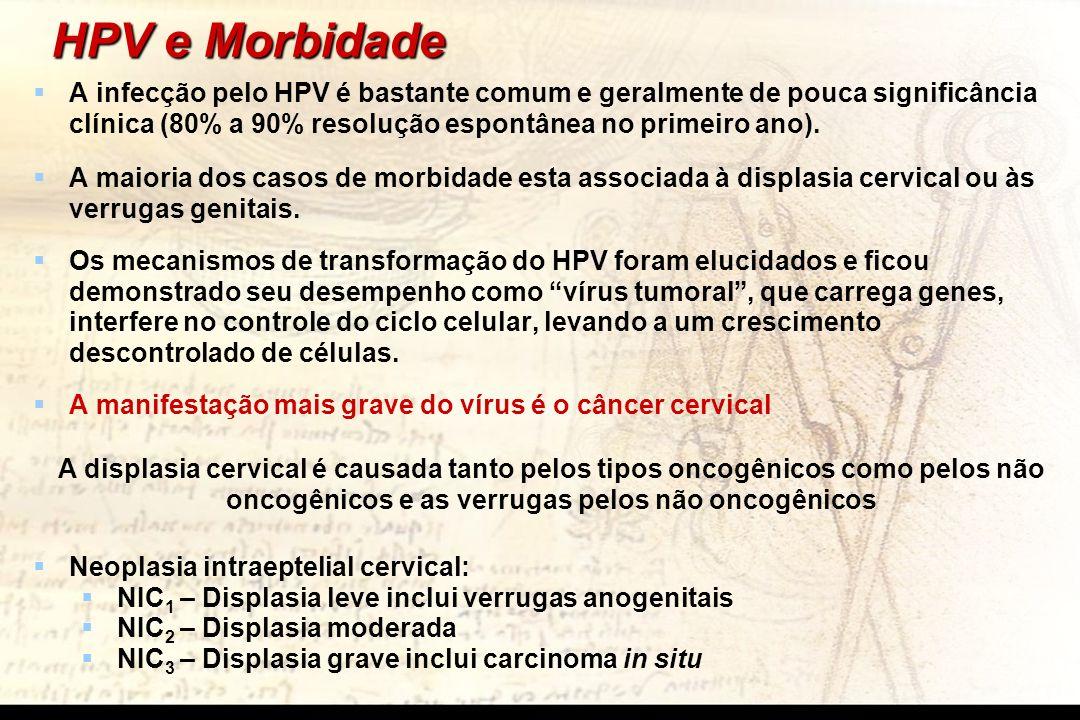 HPV e Morbidade A infecção pelo HPV é bastante comum e geralmente de pouca significância clínica (80% a 90% resolução espontânea no primeiro ano).