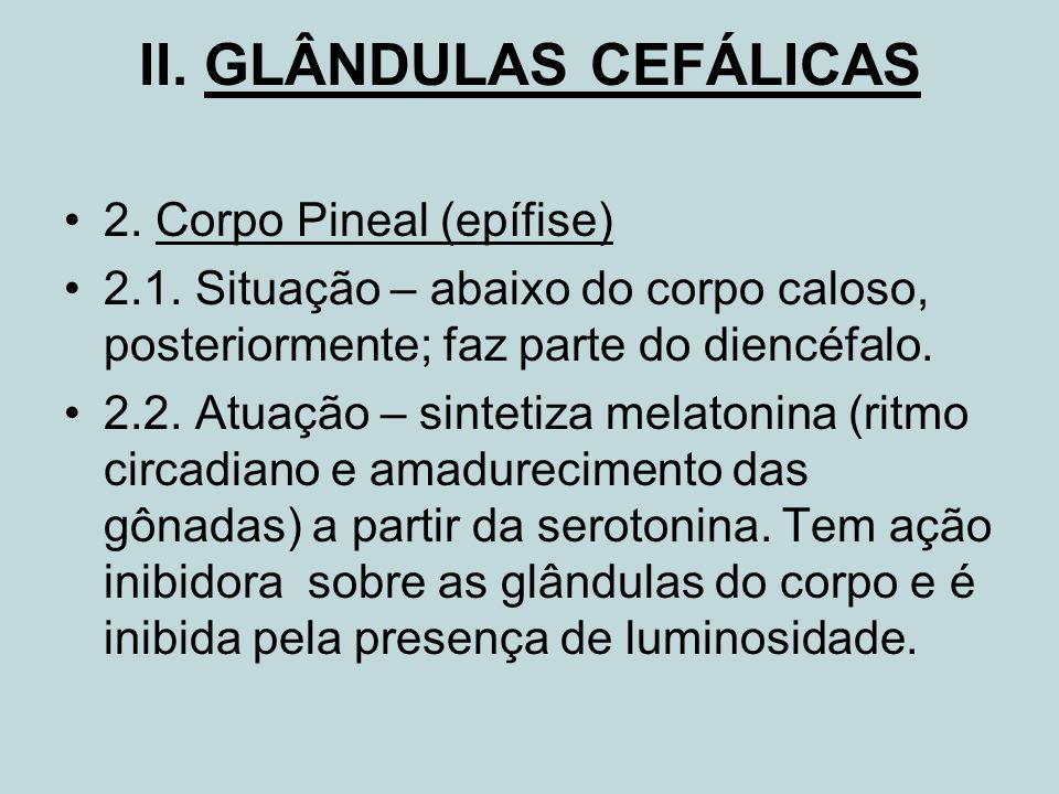 II. GLÂNDULAS CEFÁLICAS