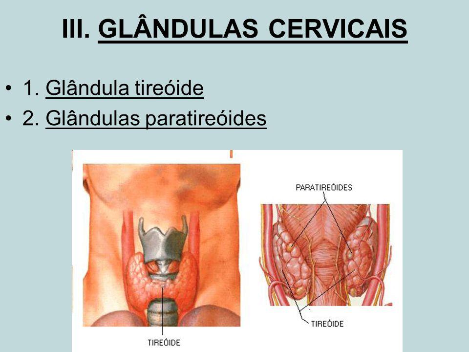 III. GLÂNDULAS CERVICAIS