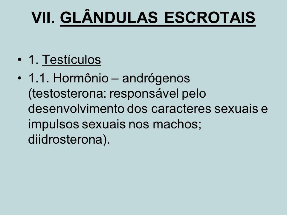 VII. GLÂNDULAS ESCROTAIS