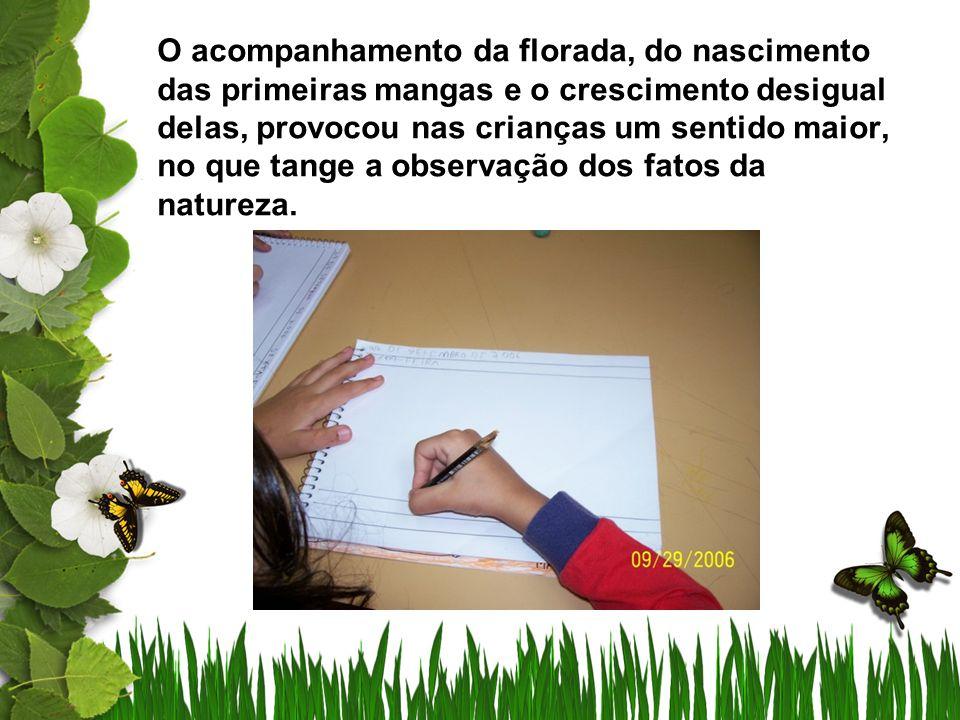 O acompanhamento da florada, do nascimento das primeiras mangas e o crescimento desigual delas, provocou nas crianças um sentido maior, no que tange a observação dos fatos da natureza.
