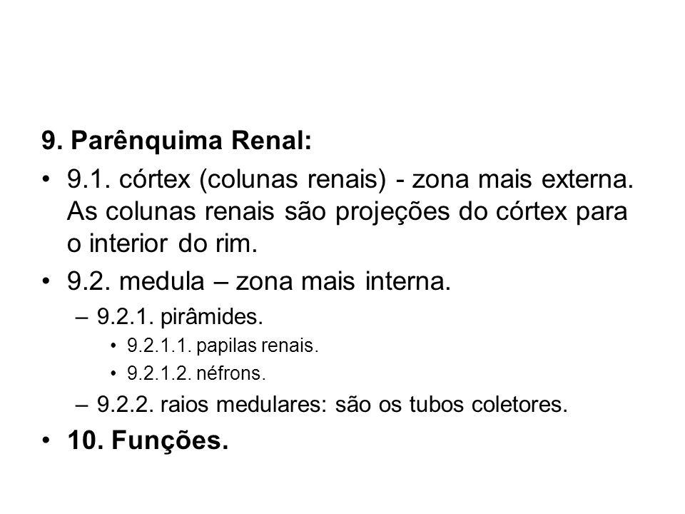 9.2. medula – zona mais interna.