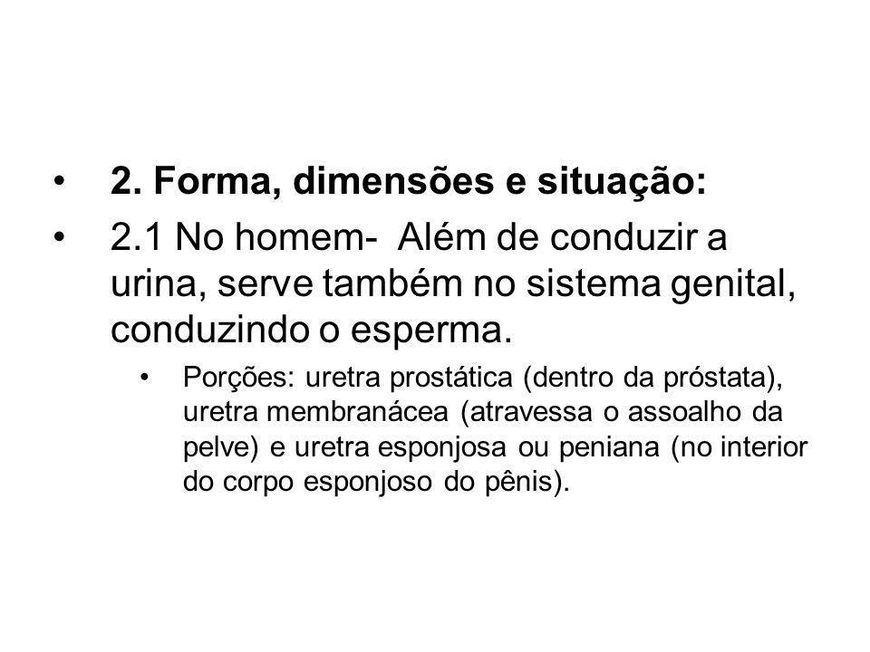 2. Forma, dimensões e situação: