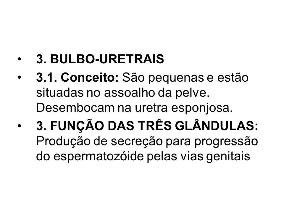 3. BULBO-URETRAIS 3.1. Conceito: São pequenas e estão situadas no assoalho da pelve. Desembocam na uretra esponjosa.
