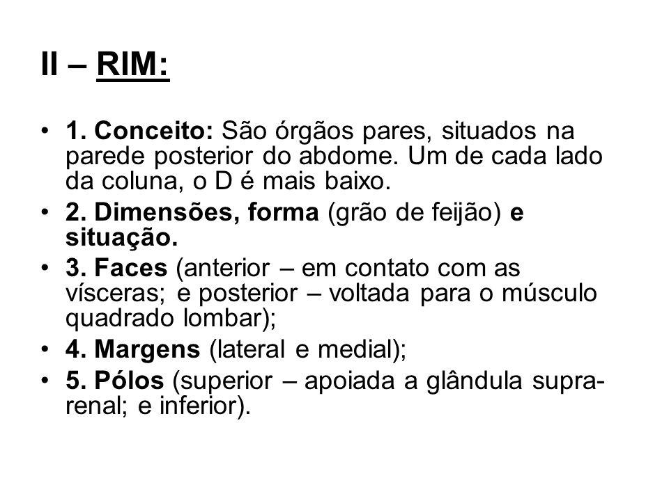 II – RIM: 1. Conceito: São órgãos pares, situados na parede posterior do abdome. Um de cada lado da coluna, o D é mais baixo.