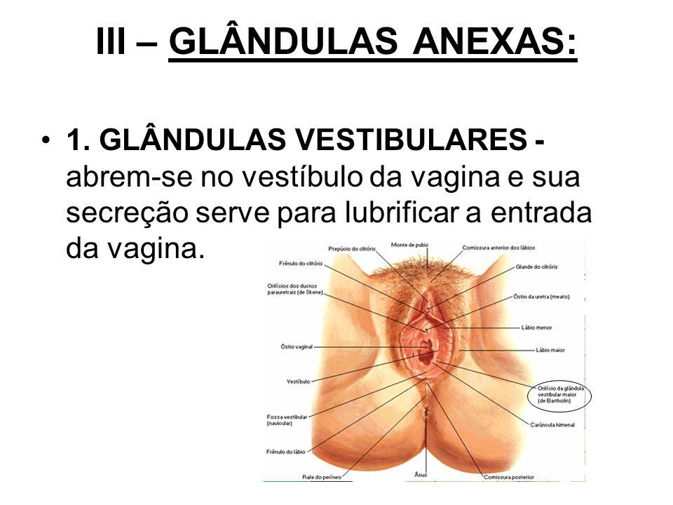 III – GLÂNDULAS ANEXAS: