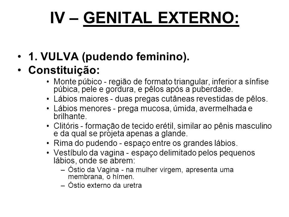 IV – GENITAL EXTERNO: 1. VULVA (pudendo feminino). Constituição: