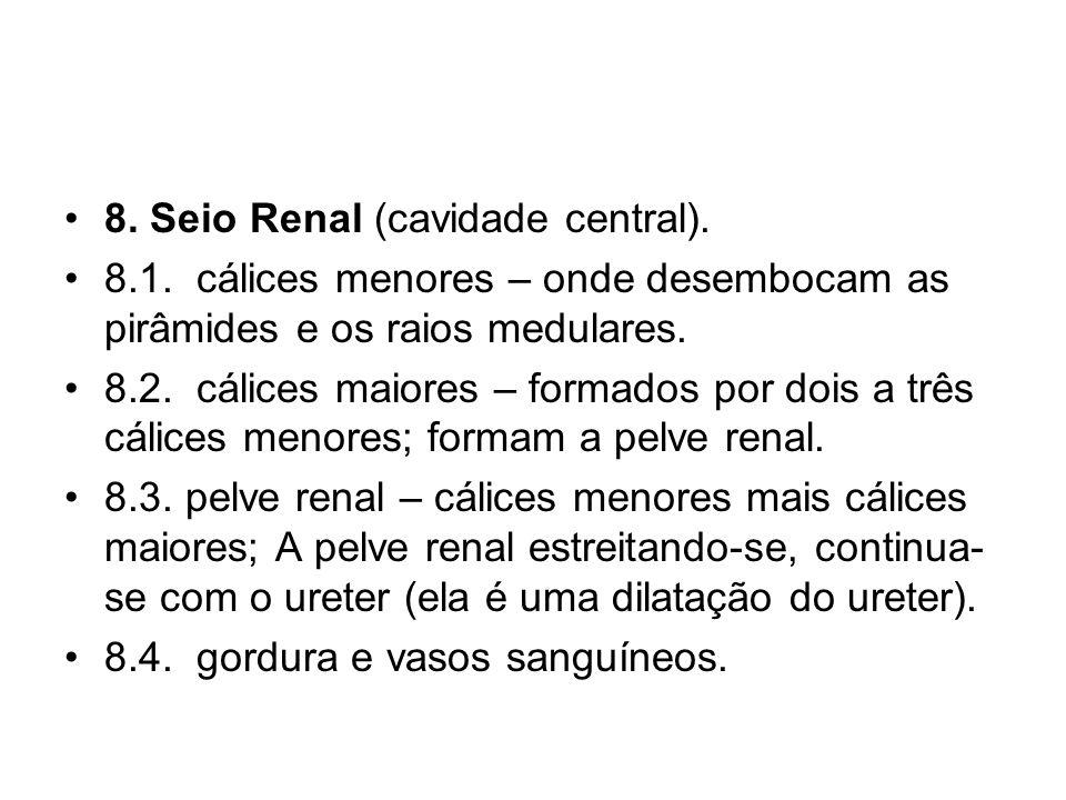 8. Seio Renal (cavidade central).