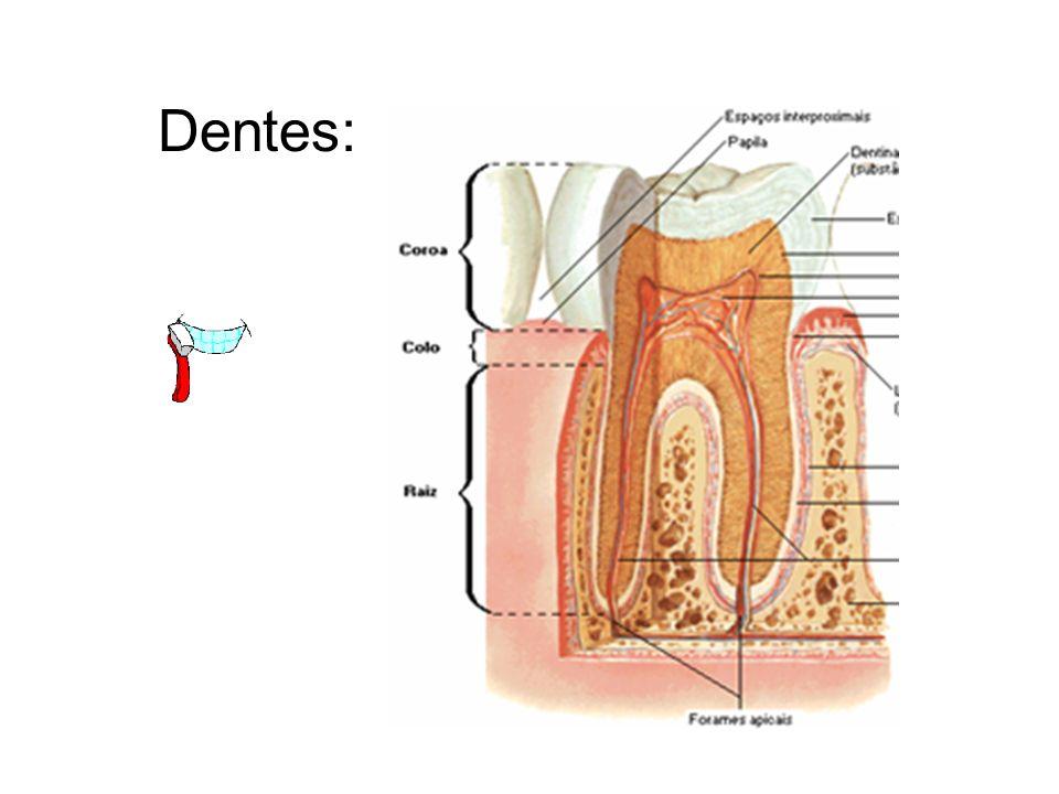 Dentes: