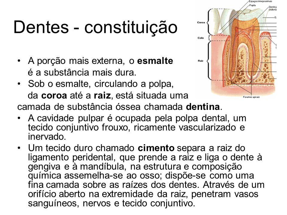 Dentes - constituição A porção mais externa, o esmalte