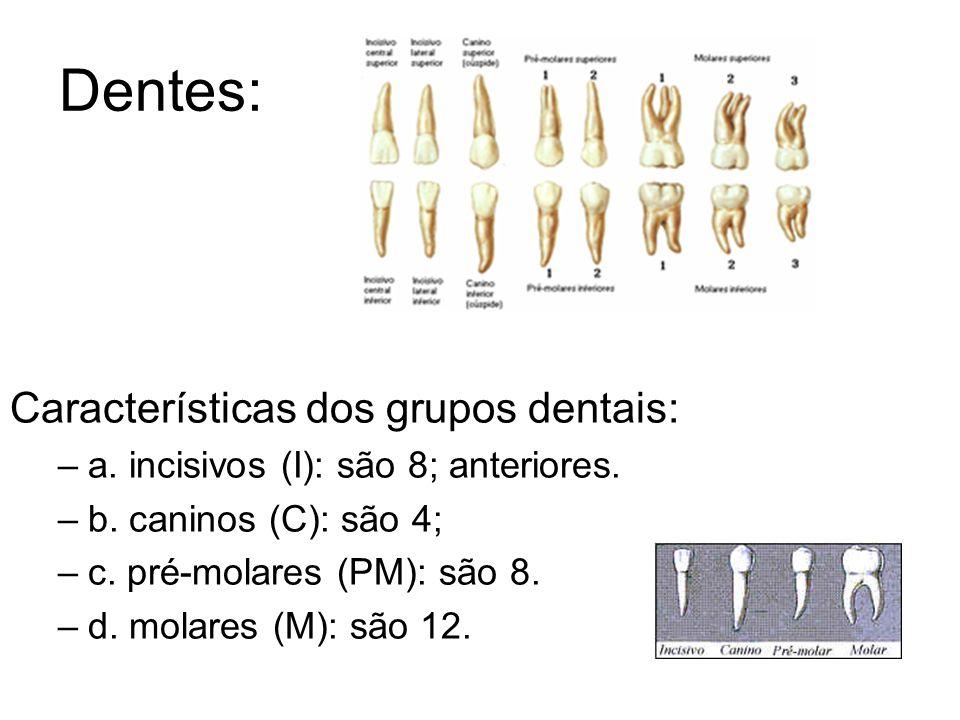 Dentes: Características dos grupos dentais: