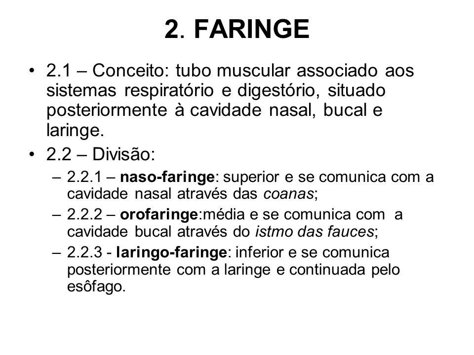 2. FARINGE 2.1 – Conceito: tubo muscular associado aos sistemas respiratório e digestório, situado posteriormente à cavidade nasal, bucal e laringe.