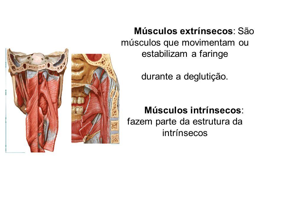 Músculos intrínsecos: fazem parte da estrutura da intrínsecos