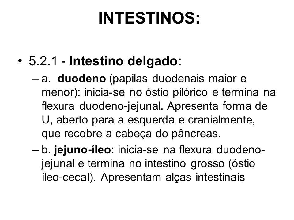 INTESTINOS: 5.2.1 - Intestino delgado: