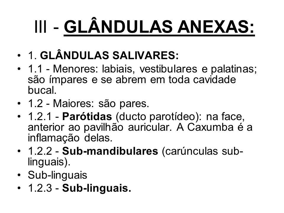 III - GLÂNDULAS ANEXAS: