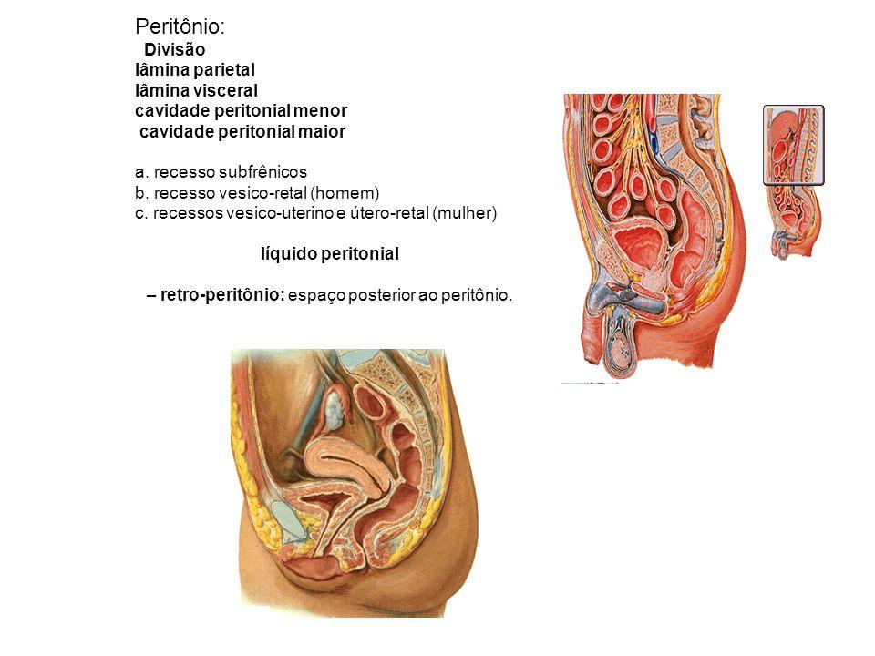 – retro-peritônio: espaço posterior ao peritônio.