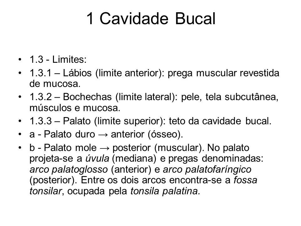 1 Cavidade Bucal 1.3 - Limites: