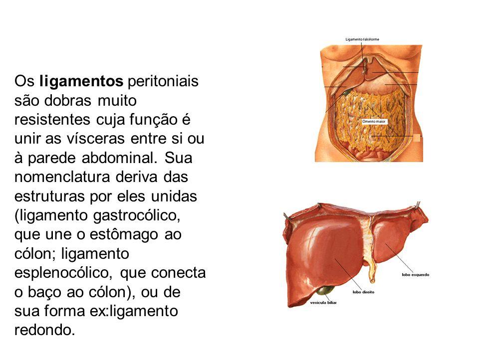 Os ligamentos peritoniais são dobras muito resistentes cuja função é unir as vísceras entre si ou à parede abdominal.