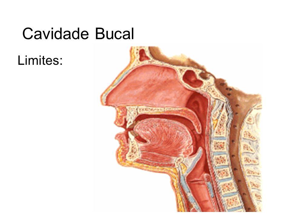 Cavidade Bucal Limites: