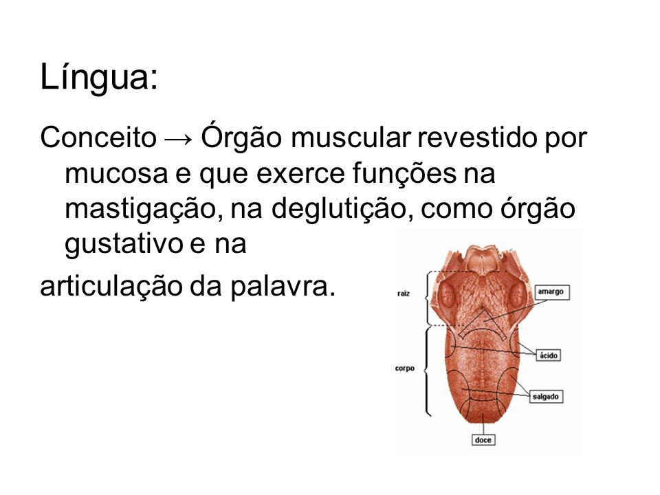 Língua: Conceito → Órgão muscular revestido por mucosa e que exerce funções na mastigação, na deglutição, como órgão gustativo e na.