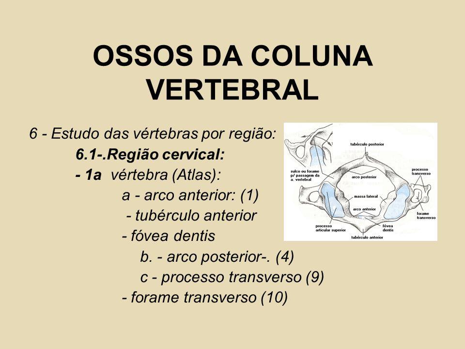 OSSOS DA COLUNA VERTEBRAL