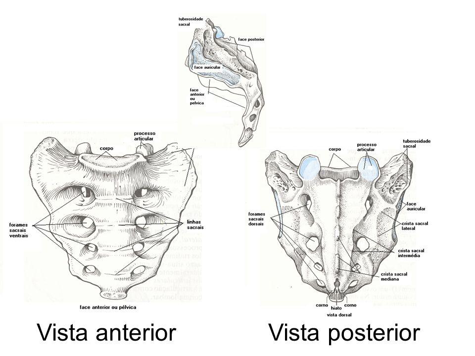 Vista anterior Vista posterior