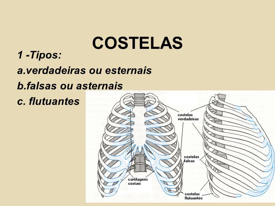 COSTELAS 1 -Tipos: a.verdadeiras ou esternais b.falsas ou asternais