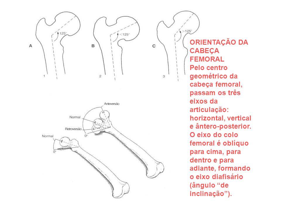ORIENTAÇÃO DA CABEÇA FEMORAL Pelo centro geométrico da cabeça femoral, passam os três eixos da articulação: horizontal, vertical e ântero-posterior.