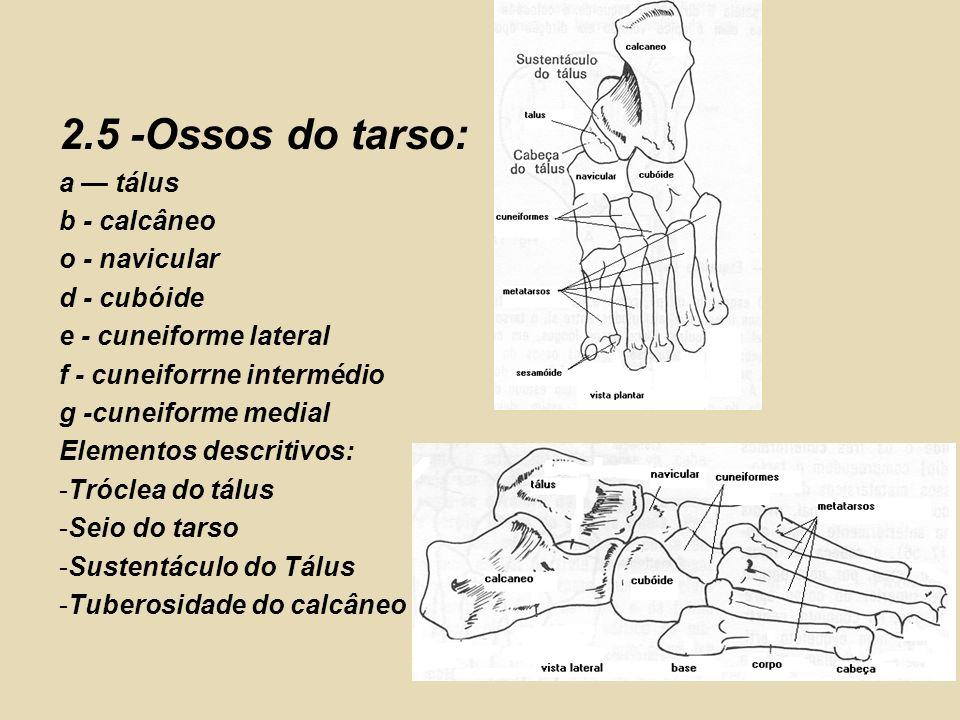 2.5 -Ossos do tarso: a — tálus b - calcâneo o - navicular d - cubóide