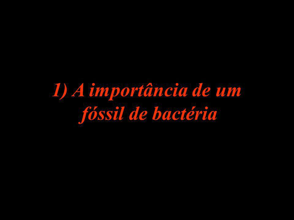 1) A importância de um fóssil de bactéria
