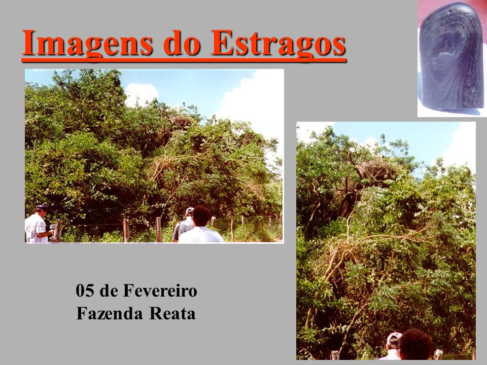 Imagens do Estragos 05 de Fevereiro Fazenda Reata