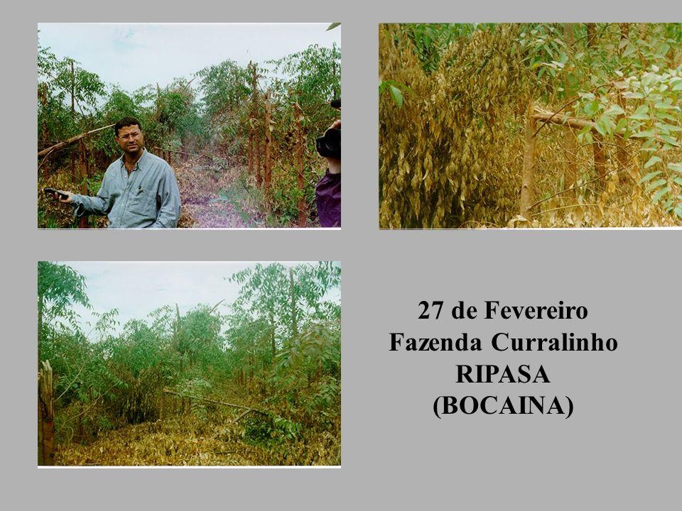 27 de Fevereiro Fazenda Curralinho RIPASA (BOCAINA)