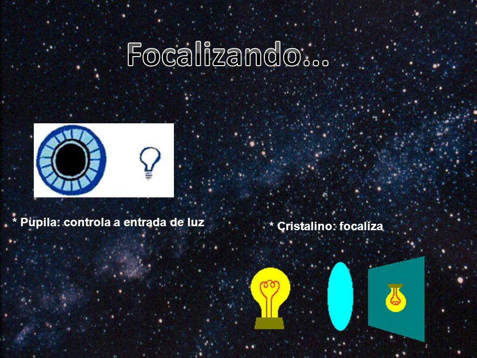 Focalizando... * Pupila: controla a entrada de luz