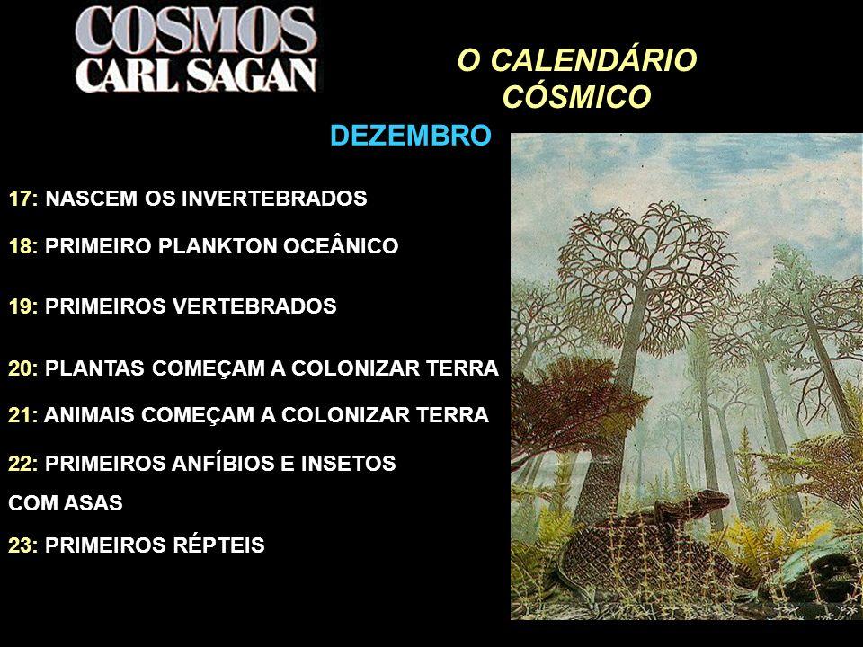 O CALENDÁRIO CÓSMICO DEZEMBRO 17: NASCEM OS INVERTEBRADOS