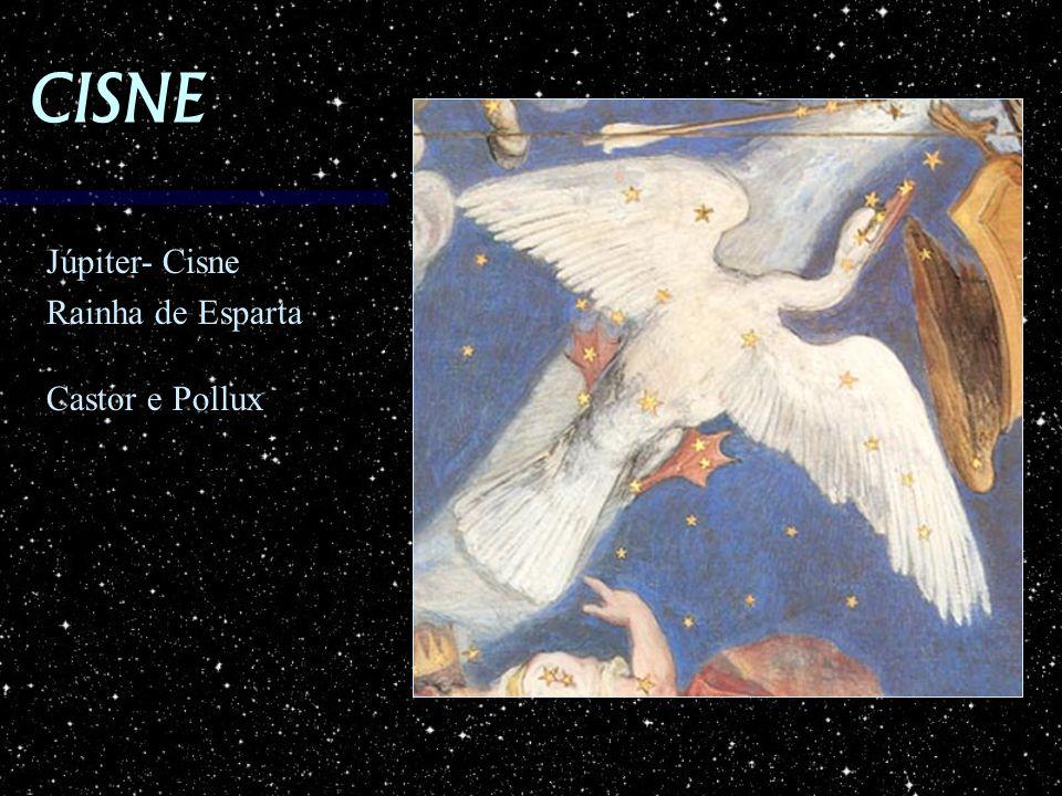 CISNE Júpiter- Cisne Rainha de Esparta Castor e Pollux