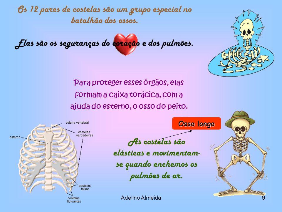 Os 12 pares de costelas são um grupo especial no batalhão dos ossos.