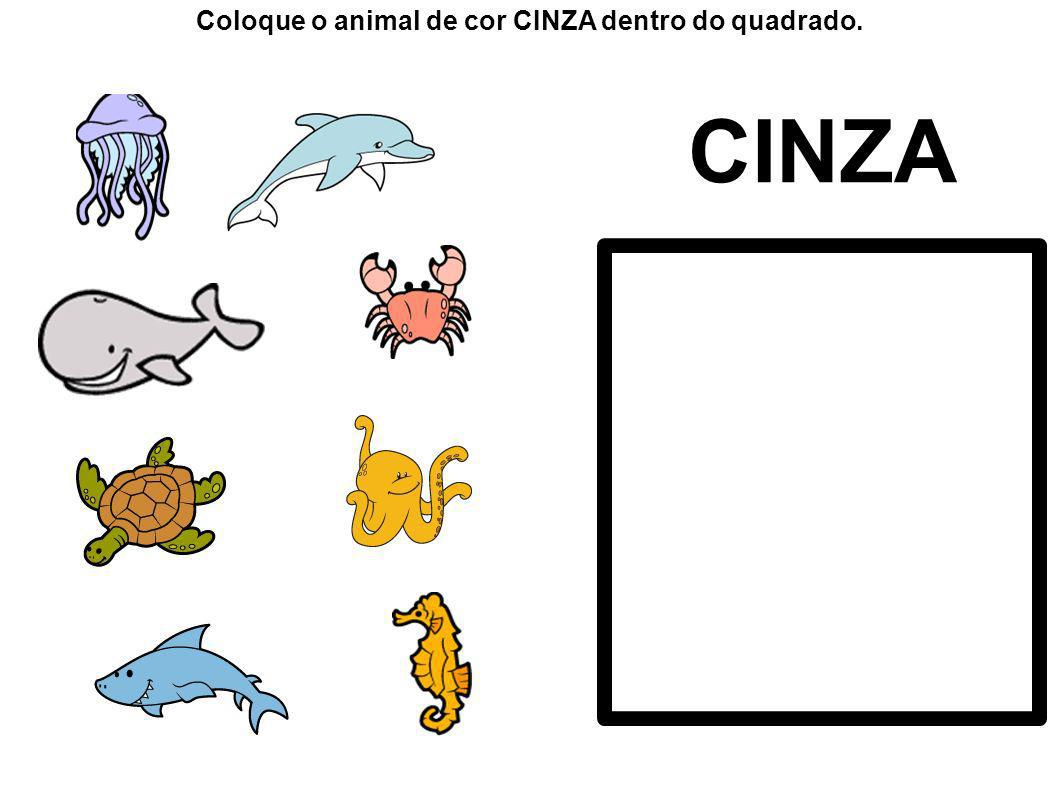 Coloque o animal de cor CINZA dentro do quadrado.