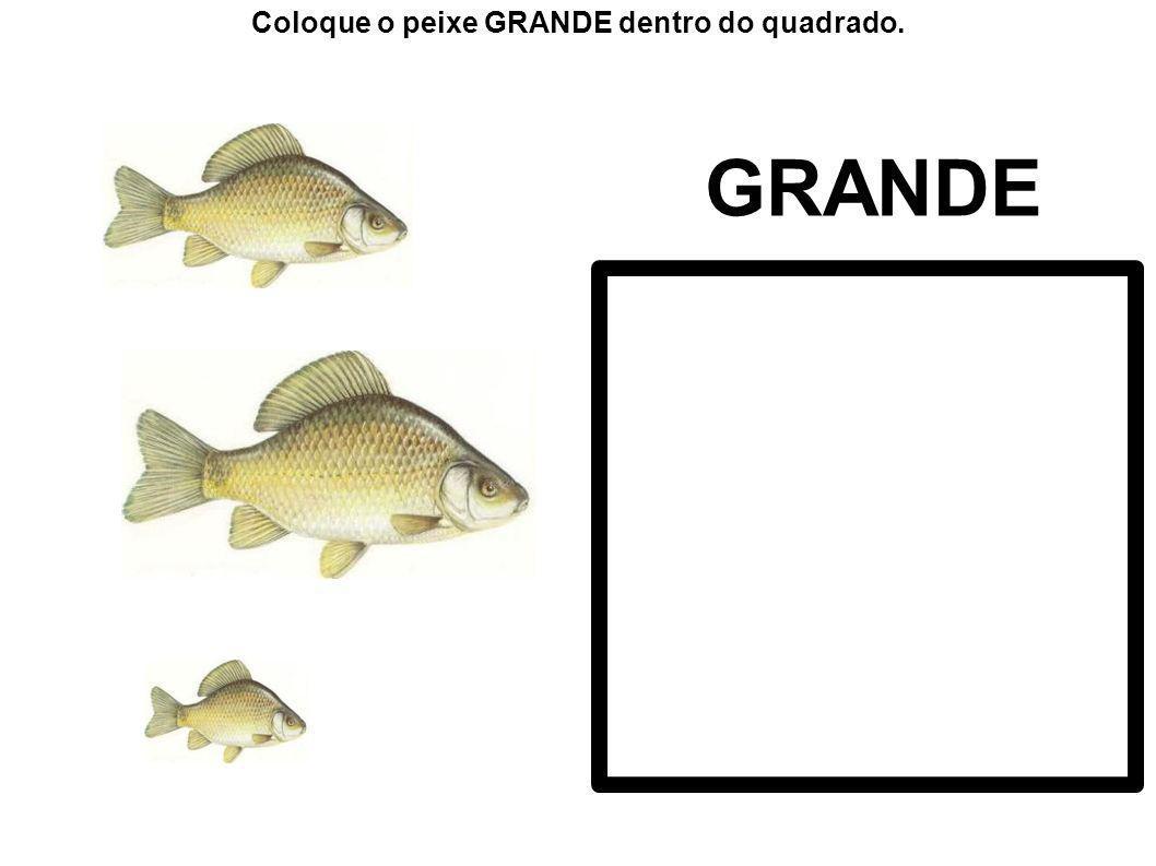 Coloque o peixe GRANDE dentro do quadrado.