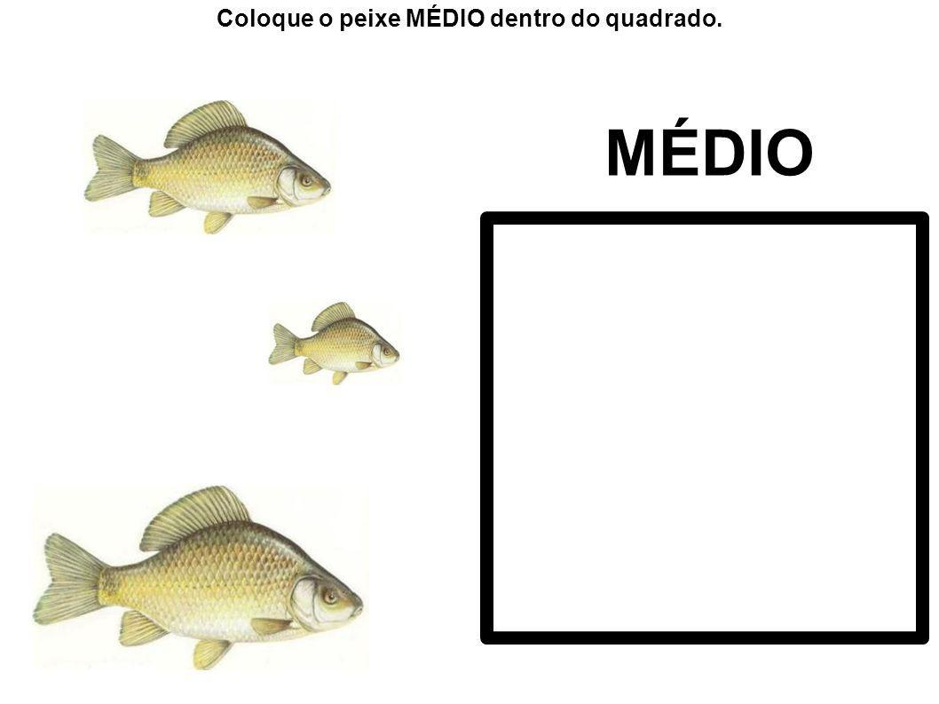 Coloque o peixe MÉDIO dentro do quadrado.