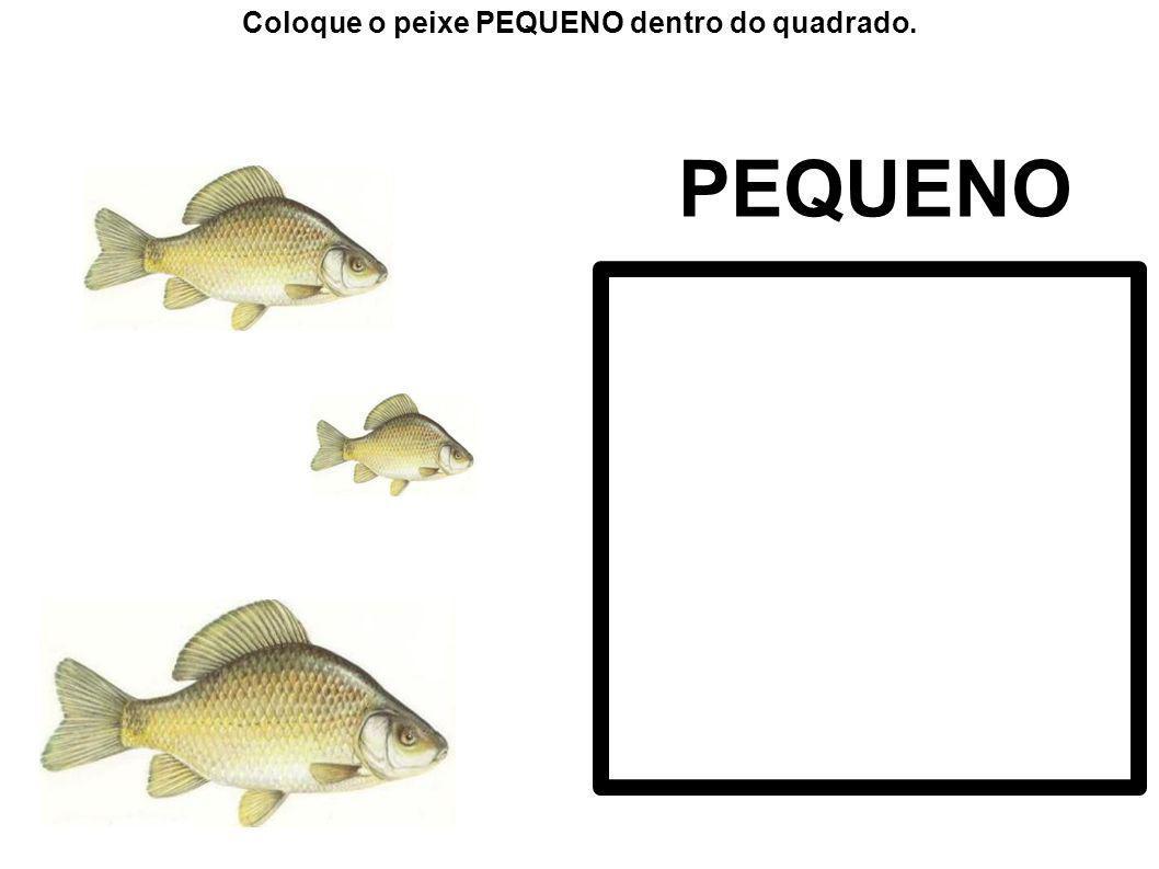 Coloque o peixe PEQUENO dentro do quadrado.
