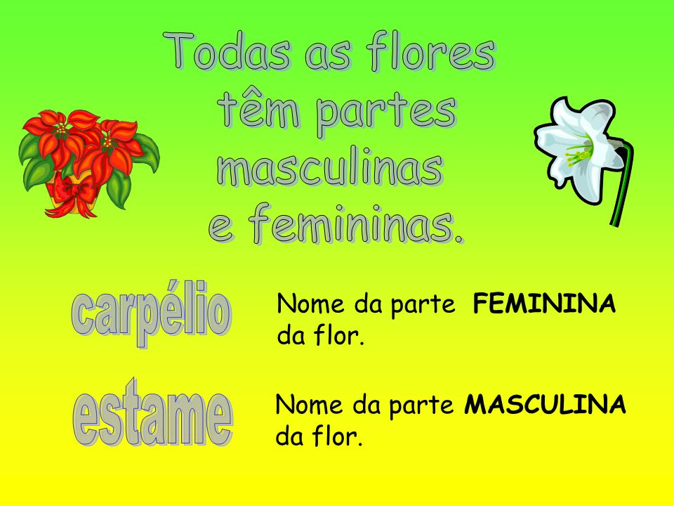 Todas as flores têm partes masculinas e femininas. carpélio estame