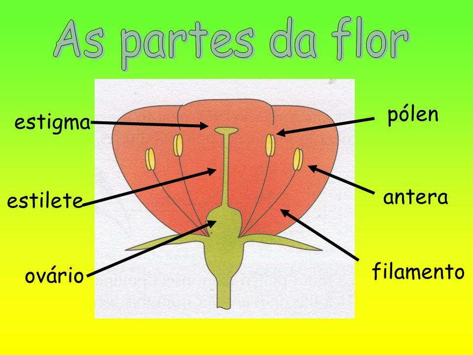 As partes da flor pólen estigma antera estilete filamento ovário