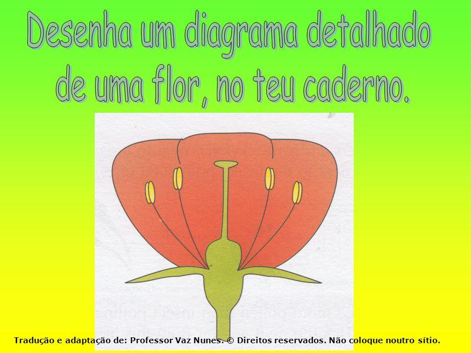 Desenha um diagrama detalhado de uma flor, no teu caderno.