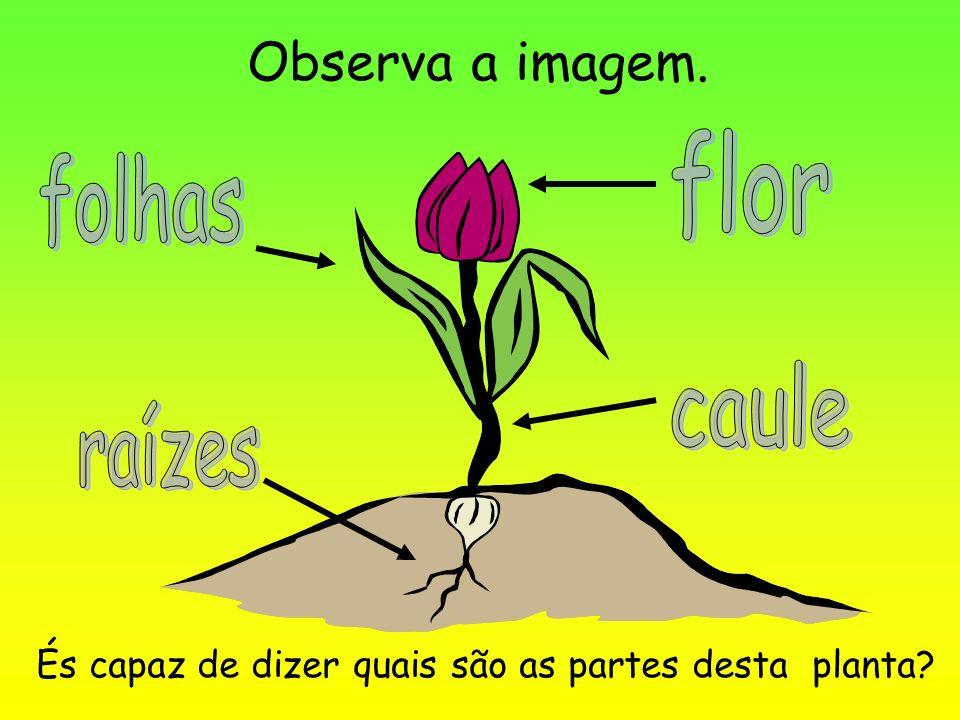 Observa a imagem. flor folhas caule raízes