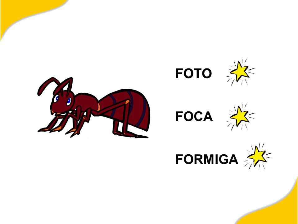 FOTO FOTO FOCA FORMIGA