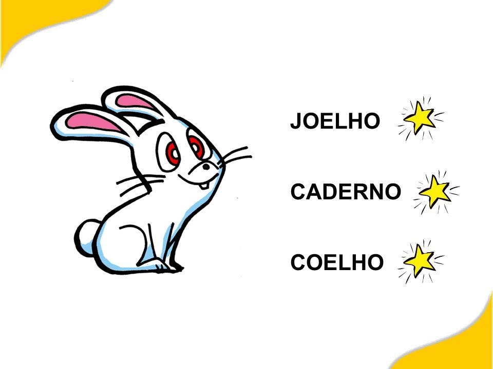 JOELHO CADERNO COELHO